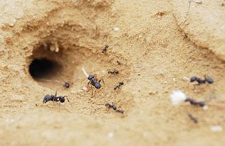 שמים סוף לנמלים