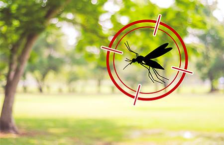 חרקים נפוצים בישראל ודרכי הטיפול בהם